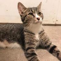 Adopt A Pet :: Freya - Richmond, IN