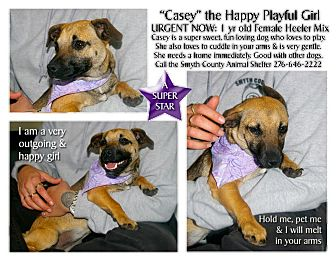 Australian Cattle Dog Mix Dog for adoption in MARION, Virginia - Casey