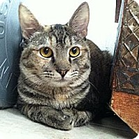 Adopt A Pet :: Princess - Miami, FL