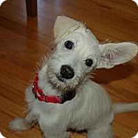 Adopt A Pet :: Dee Q. - Los Angeles, CA