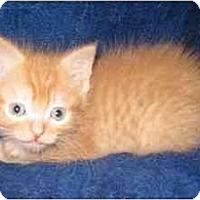 Adopt A Pet :: Stuart - Richmond, VA
