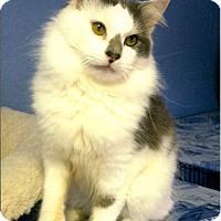 Adopt A Pet :: Watson - Medway, MA