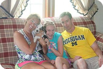 Australian Shepherd/American Bulldog Mix Puppy for adoption in Northville, Michigan - G15 - Lucille ADOPTED