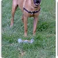 Adopt A Pet :: A handsome pup named Scoobie - Sacramento, CA