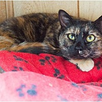 Adopt A Pet :: Buttercup - Corinne, UT
