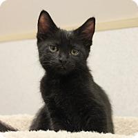 Adopt A Pet :: Baloo - Naperville, IL