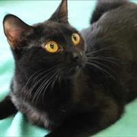 Adopt A Pet :: Elvira - Belle Chasse, LA