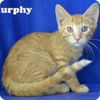 Adopt A Pet :: Murphy - Carencro, LA