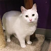 Adopt A Pet :: Puddin - Herndon, VA