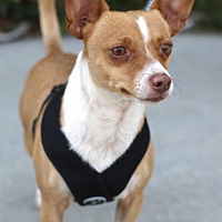 Adopt A Pet :: Lucky - Los Angeles, CA