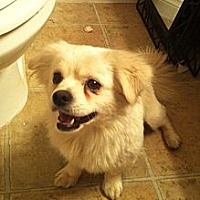 Adopt A Pet :: Cubby - Las Vegas, NV