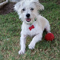 Adopt A Pet :: Quincy - Snyder, TX