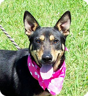 Shepherd (Unknown Type) Mix Dog for adoption in Leland, Mississippi - DIVA