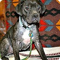 Adopt A Pet :: Alice - Chesapeake, VA