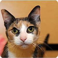 Adopt A Pet :: Carley - Farmingdale, NY