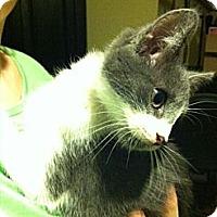 Adopt A Pet :: Cinder - Chesterfield, VA