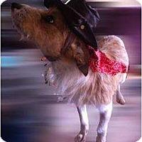 Adopt A Pet :: Bruiser - Justin, TX