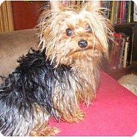 Adopt A Pet :: Logan - Palmyra, WI
