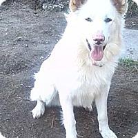 Adopt A Pet :: King Julian - Loves to Play! - Huntsville, ON