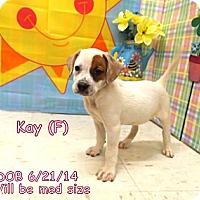 Adopt A Pet :: Kay - South Jersey, NJ