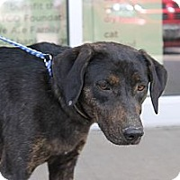 Adopt A Pet :: Pru - Fountain, CO