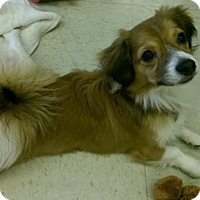 Adopt A Pet :: TOBY (see TUCKER too) - Scottsdale, AZ
