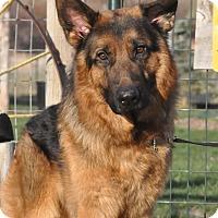 Adopt A Pet :: Doni - Hamilton, MT