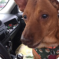 Adopt A Pet :: Rusty Nail - Mount Gretna, PA