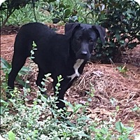 Adopt A Pet :: Gary - Monroe, NC