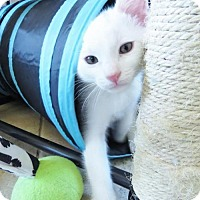 Adopt A Pet :: Ryder - Chandler, AZ