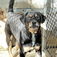 Adopt A Pet :: Rocxi - Wichita, KS