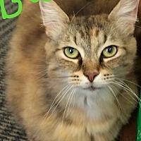 Adopt A Pet :: Bubbles - Germantown, OH