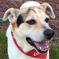 Adopt A Pet :: Patches Bonadio - Cuba, NY
