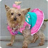 Adopt A Pet :: Jenni - Tallahassee, FL