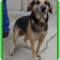 Adopt A Pet :: Andes (URGENT! $150 off fee)) - Staunton, VA