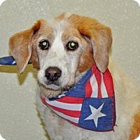 Adopt A Pet :: Sweetpea - Port Washington, NY