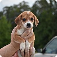 Adopt A Pet :: Valen - South Dennis, MA