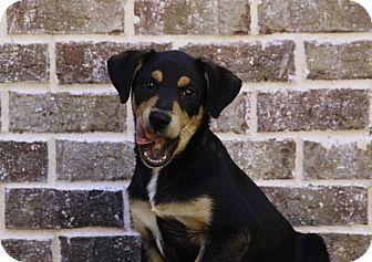 Hound (Unknown Type) Mix Puppy for adoption in Alpharetta, Georgia - Eddie Van