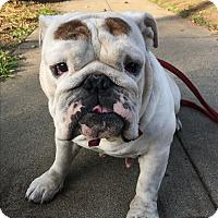 Adopt A Pet :: Eve - Van Nuys, CA