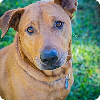 Adopt A Pet :: Rusty - Houston, TX