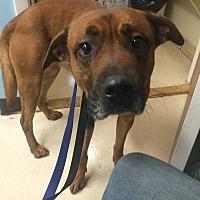 Adopt A Pet :: Porter - Oak Ridge, NJ