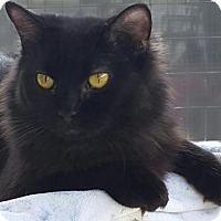 Adopt A Pet :: Noelle - North Fort Myers, FL