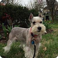 Adopt A Pet :: Dante - Springfield, MO