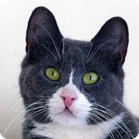 Adopt A Pet :: Goober - Norwalk, CT