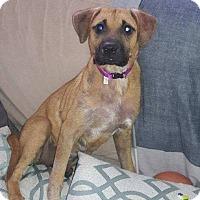 Adopt A Pet :: Love - Smithtown, NY