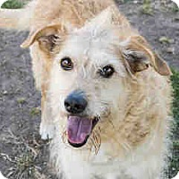 Adopt A Pet :: Izzy - Agoura, CA