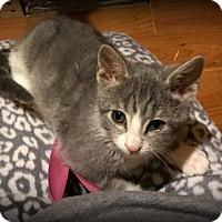 Adopt A Pet :: Emmie - Millersville, MD