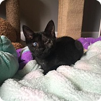 Adopt A Pet :: Cecelia - Orlando, FL