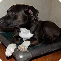 Adopt A Pet :: Ross - Terrell, TX
