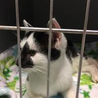 Adopt A Pet :: Jajjar - Savannah, TN
